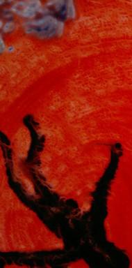 Il Cantico dei Cantici (2001)